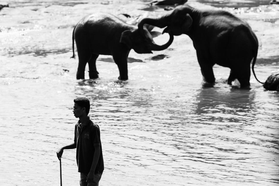 Srilanka-Elephant_960-200