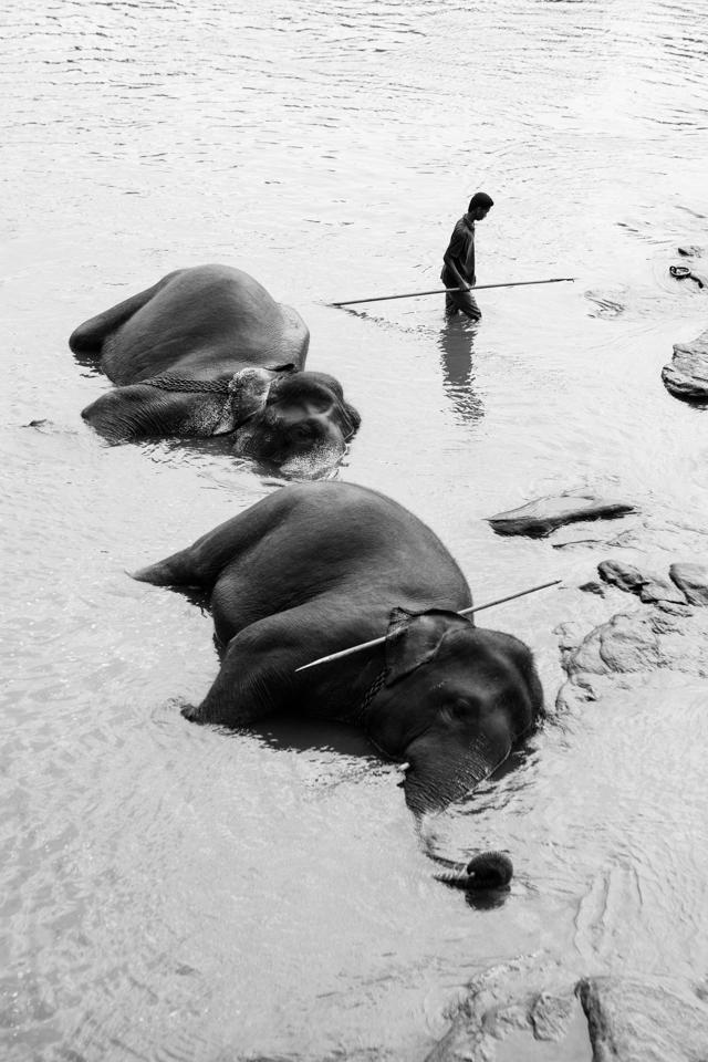 Srilanka-Elephant_960-203