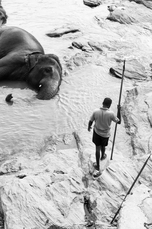 Srilanka-Elephant_960-205