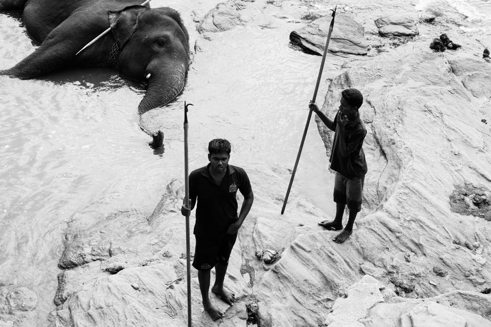 Srilanka-Elephant_960-206