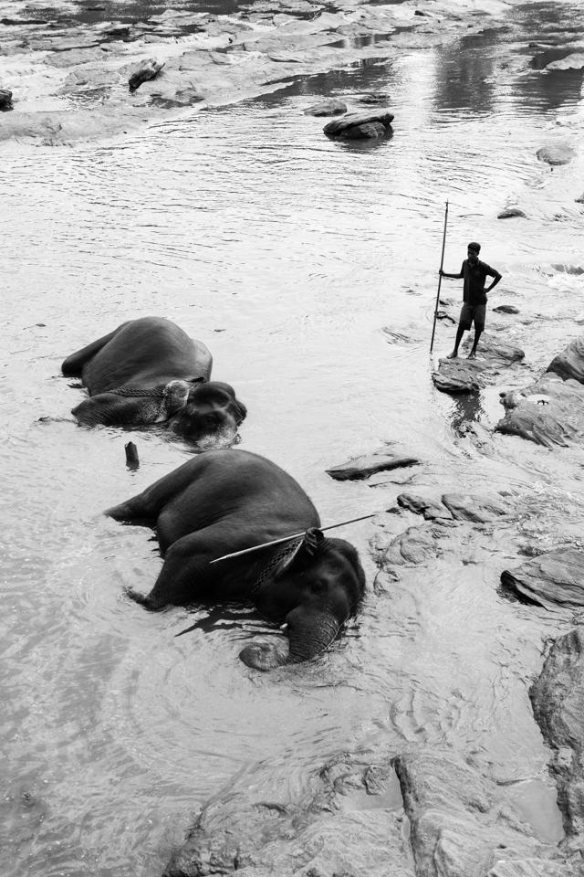 Srilanka-Elephant_960-207