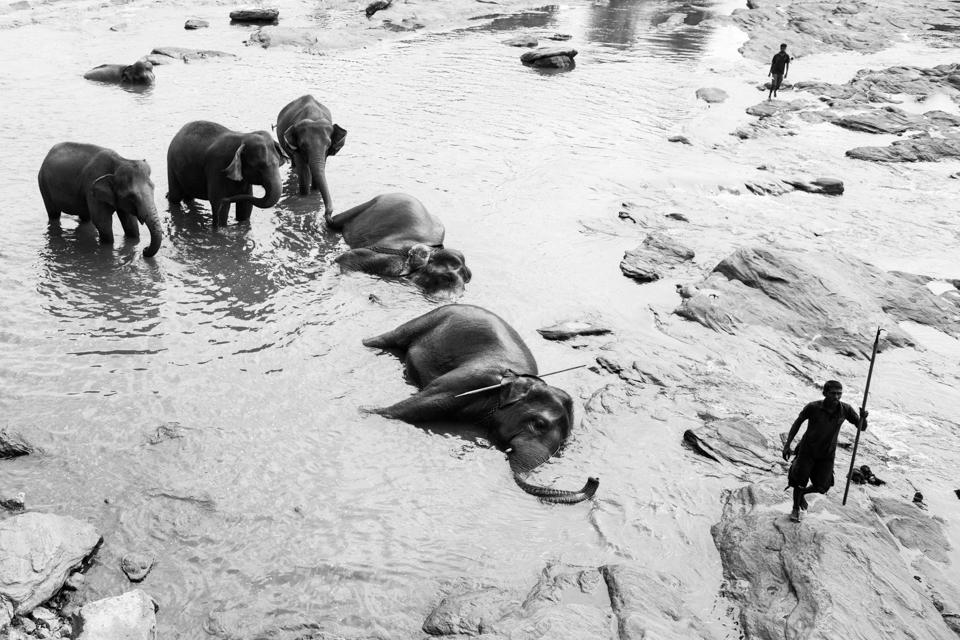 Srilanka-Elephant_960-208