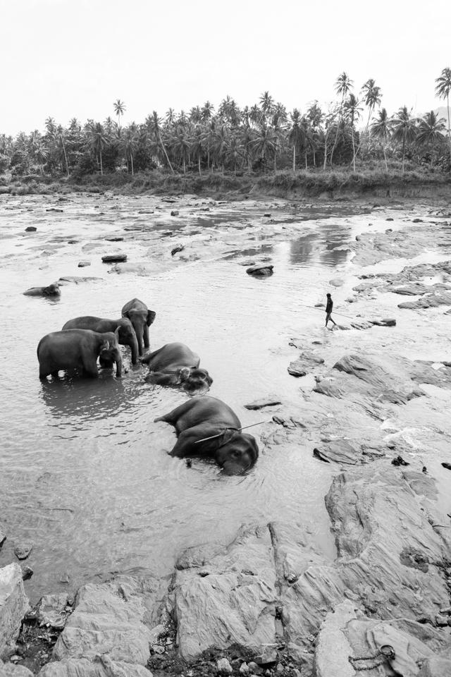 Srilanka-Elephant_960-209