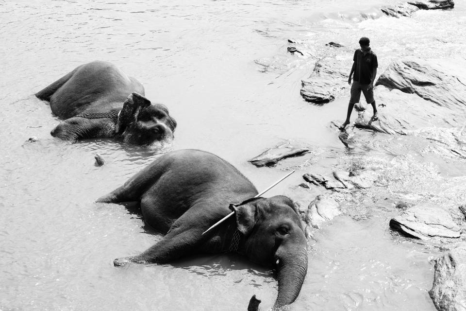 Srilanka-Elephant_960-210